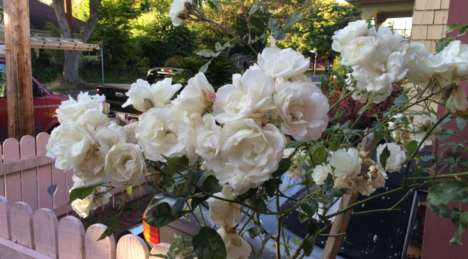 God Quotes White Roses